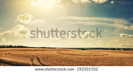 Panorama rural field with ripe wheat - stock photo