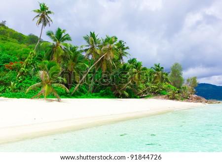 Panorama Sea Jungle - stock photo
