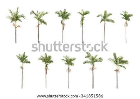 Panorama shoot for two group of palm trees isolated on white background in park. - stock photo