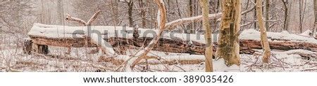 Panorama with a large tree log covered with snow in the forest