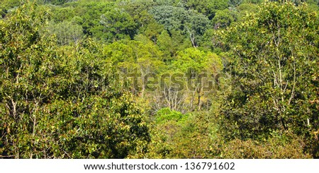 Panoramic background of a dense forest at Castle Rock State Park of Illinois - stock photo