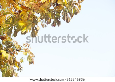 Panoramic Colorful Leaves on Azure Background with Copy space - stock photo