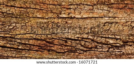 panoramic crop of aged wood