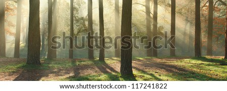 Panoramic image of morning forest with fantastic sun beams. Can be used as web site header - stock photo