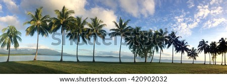 Panoramic landscape view of a row of palm trees on the coast of Port Douglas in the tropical north of  Queensland,  Australia - stock photo