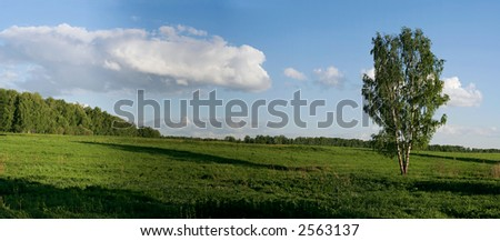 Panoramic landscape with birch, summer evening - stock photo