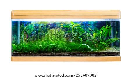 Panoramic large aquarium on a white background - stock photo