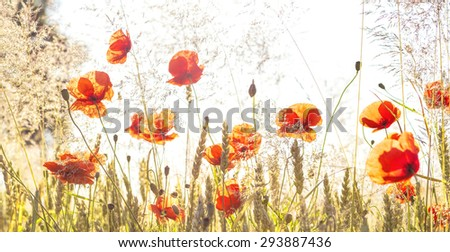 Panoramic retro view of sunrise over meadow, nature background with shallow depth of field. - stock photo