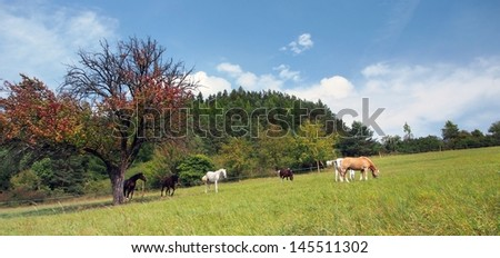 Panoramic shot of horses grazing in a field with trees in the background.