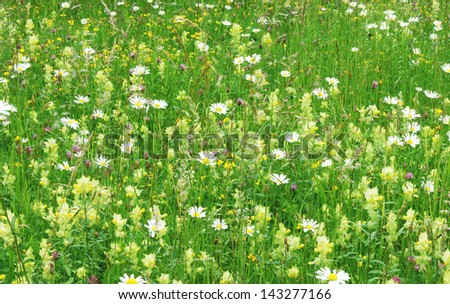 Panoramic shot of meadow with daisy-flowers and different wildflowers, filling the frame  - stock photo
