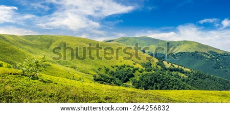 panoramic summer landscape with few trees  on the grassy hillside meadow near the forest in mountain. - stock photo