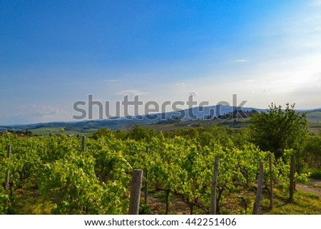 Panoramic view of a vineyard in the Tuscan countryside Chianti valley - stock photo