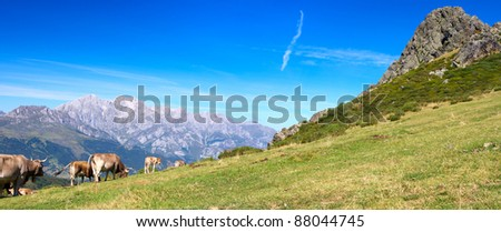 Panoramic view of asturias cows herd in the Cantabrian mountains - stock photo