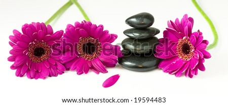 Panoramic view of 4 balanced pebbles stones surrounded by 3 violet daisy gerberas - stock photo