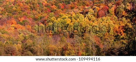 Panoramic view of colorful autumn trees - stock photo
