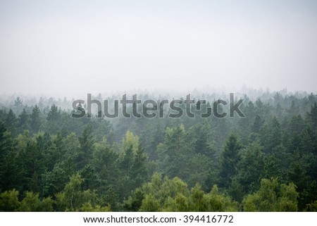Tree Tops Texture Stock Photo 116455672 Shutterstock