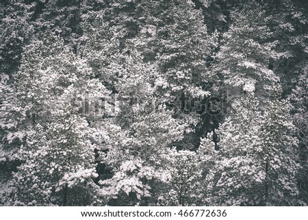 panoramic view of misty forest. far horizon. winter scene - vintage film effect