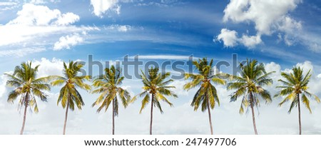 Panoramic view of palms and cloudscape, summer background. - stock photo