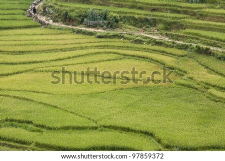 panoramic view of rice fields of sapa, vietnam