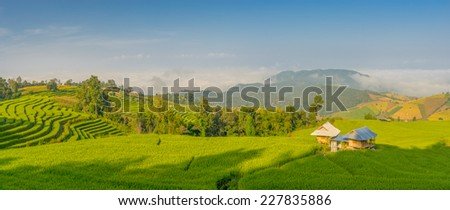 Panoramic view of rice terrace in the morning, Chiang Mai Thailand