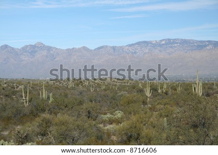 Panoramic view of Saguaro National Park with the Rincon Mountains, Sonoran Desert, Tucson, Arizona - stock photo