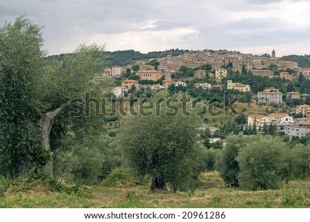 Panoramic view of Seggiano (Grosseto, Tuscany, Italy) and old olive trees at summer