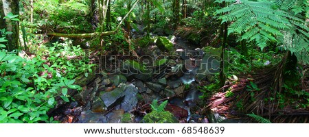 Panoramic view of the famous El Yunque Rainforest of Puerto Rico - stock photo