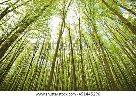 Panoramic view of the forest where are a lot of trees - stock photo