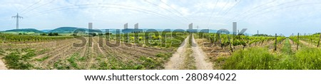 panoramic view  of vineyard in spring time