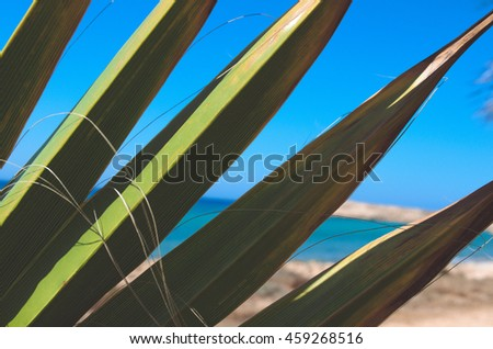 Panoramic view with palm tree leaves, blue background