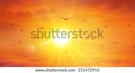 Panoramic warm sunset. Birds flight ahead the setting sun. High resolution sky background - stock photo