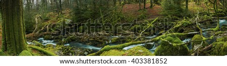 Panoramic wide view on ancient forest woodland in Devon, UK with fast moving creek. - stock photo