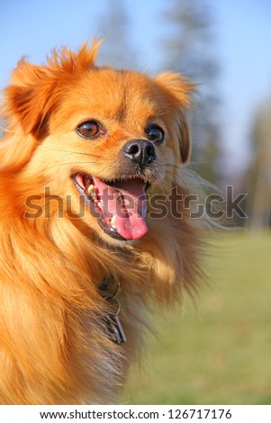 Panting Puppy - stock photo
