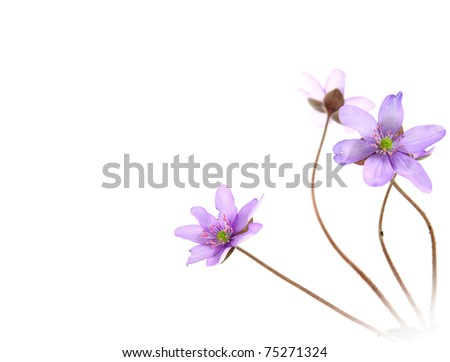 Paper with blue flowers in corner, copy space for text - stock photo
