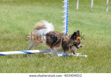 Papillon Leaping Over a Jump at a Dog Agility Trial - stock photo