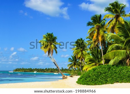 Paradise beach with amazing palm trees entering the azure ocean - stock photo