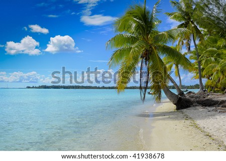 Paradise beach with palms and white sand in french polynesia - stock photo