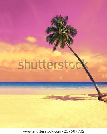 Paradise nature, palm tree over white sand beach on the tropical beach. Summer travel background with retro vintage instagram filter. - stock photo