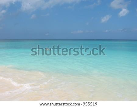 Paradise Swimmer - stock photo