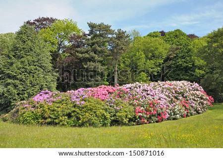 Parc with rhododendrons in Brussels, Belgium - stock photo