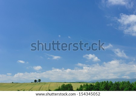 Parent tree, famous of north of Japan - stock photo