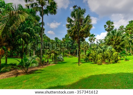 Park and recreation area in the city. Green field and palm trees in summer time. Beautiful natural background.