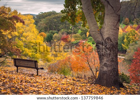 Park bench in a gorgeous Autumn Forest - stock photo