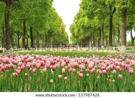 Park Garden  - stock photo