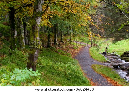 Park in a forest - stock photo