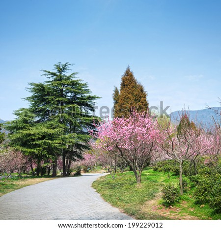 Magnolia Tree Stock Photos Images Amp Pictures Shutterstock