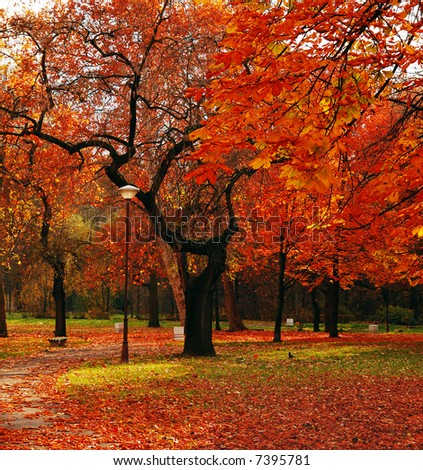 Park in November - stock photo