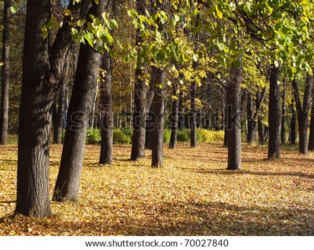Park in the fall - stock photo