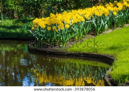 Park in The Spring.  Garden flowers - stock photo