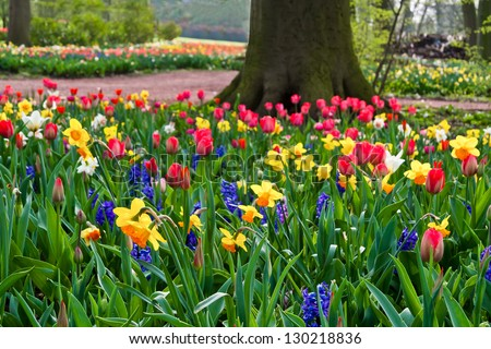 Park in The Spring.Tulips. Spring landscape. - stock photo